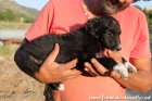 OTHELLO des Tourelles - chiot Border Collie non LOF